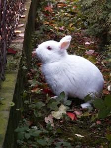 rabbit-94227_640